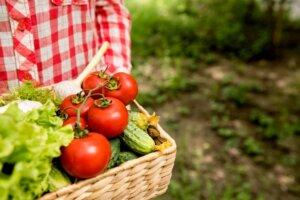 enzimi, klub zdravih navika, kzn, enzimi klub zdravih navika, enzimi kzn, digestivni enzimi, digestivni likeri, metabolizam, organizam, zdrava ishrana, varenje, iceberg salat centar