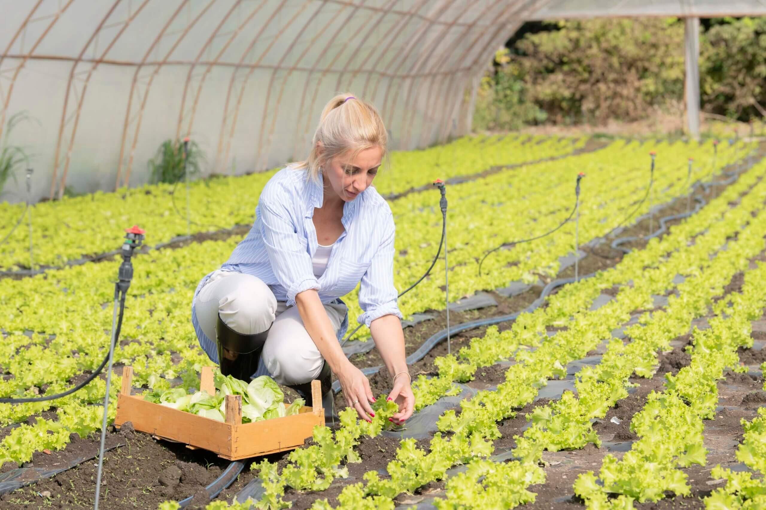 prednosti, klub zdravih navika, kzn, prednosti klub zdravih navika, prednosti kzn, prednost salate, salata za dorucak, zelenis, predjelo, iceberg salat centar